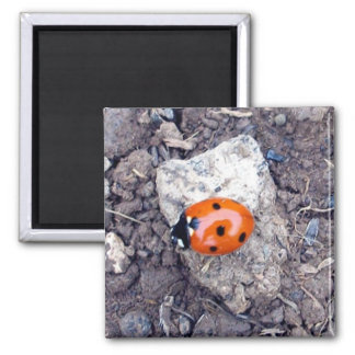 Rock Climber Ladybug Magnet