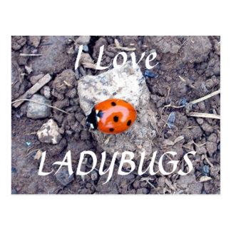 Rock Climber Ladybug Postcard