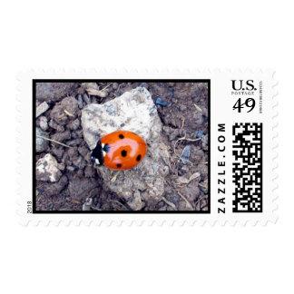 Rock Climber Ladybug Stamp