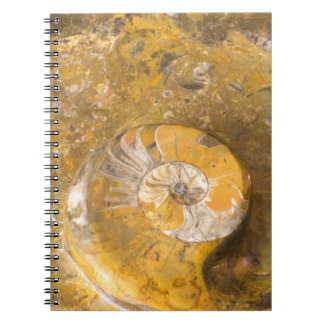 Rock Containing Many Fossils Including Ammonite Notebook