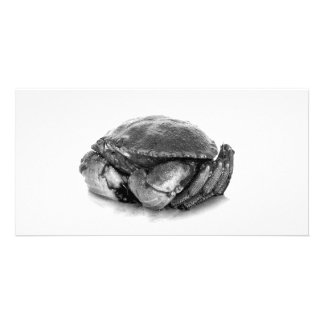 Rock Crab II Photocard Personalized Photo Card