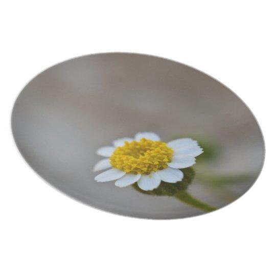 Rock Daisy Dinner Plate