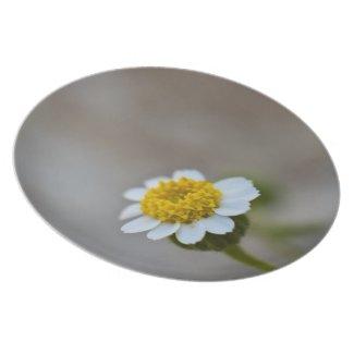Rock Daisy Dinner Plates