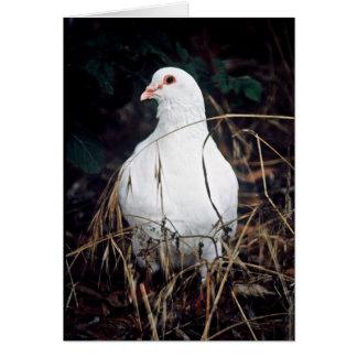 Rock Dove Greeting Card