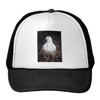 Rock Dove Trucker Hats