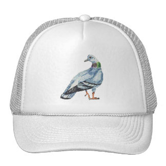 Rock Dove Or Rock Pigeon Hat