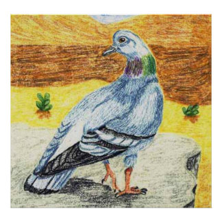 Rock Dove, Or Rock Pigeon Posters
