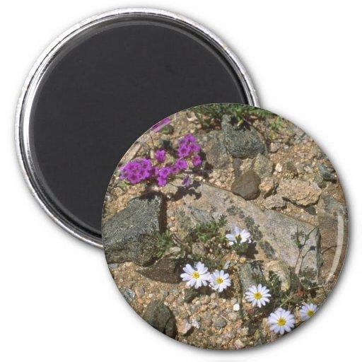 Rock Hard Plants Fridge Magnets