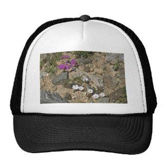 Rock Hard Plants Mesh Hats
