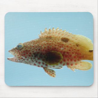 Rock Hind Fish Mouse Pad