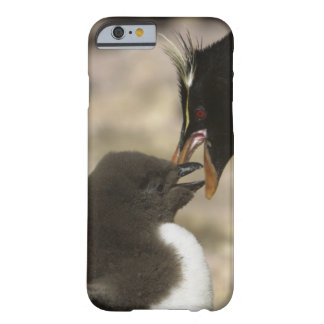 Rock-hopper Penguin, Eudyptes chrysocome, Barely There iPhone 6 Case