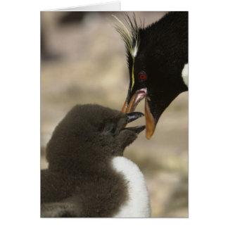 Rock-hopper Penguin, Eudyptes chrysocome, Card