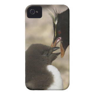 Rock-hopper Penguin, Eudyptes chrysocome, iPhone 4 Cover