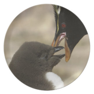 Rock-hopper Penguin, Eudyptes chrysocome, Melamine Plate