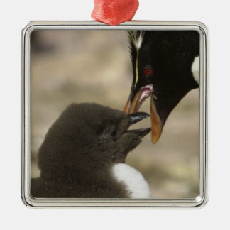 Rock-hopper Penguin, Eudyptes chrysocome, Metal Ornament