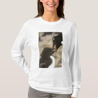 Rock-hopper Penguin, Eudyptes chrysocome, T-Shirt