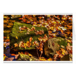 Rock in a Stream Greeting Cards