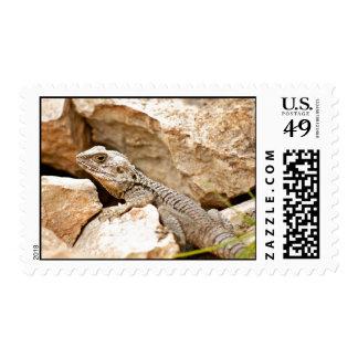Rock Lizard Postage Stamp