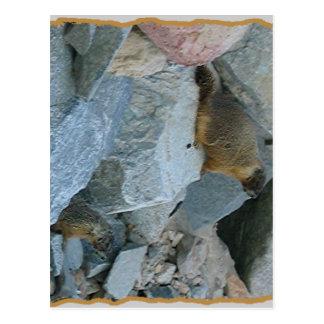 Rock Marmots animal wildlife nature prairie dogs Postcard