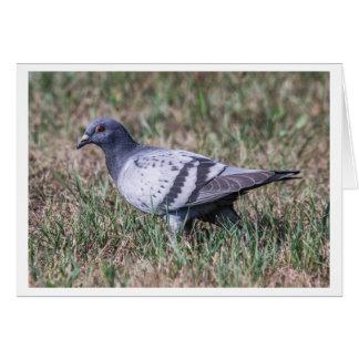 Rock Pigeon Greeting Card