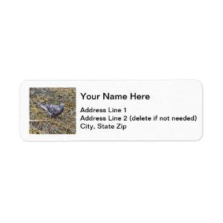 Rock Pigeon Return Address Label