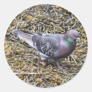 Rock Pigeon Round Stickers