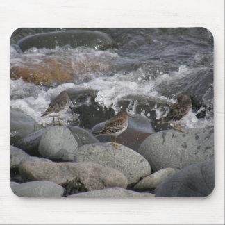 Rock Sandpiper (Calidris ptilocnemis) Mouse Pad