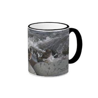 Rock Sandpiper Calidris ptilocnemis Mug