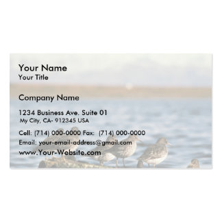 Rock Sandpiper Flock Business Cards