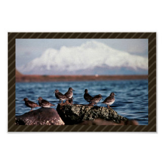 Rock Sandpipers at Rocky Shoreline Print