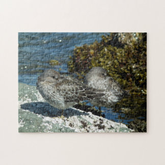 Rock Sandpipers on the Beach Puzzle