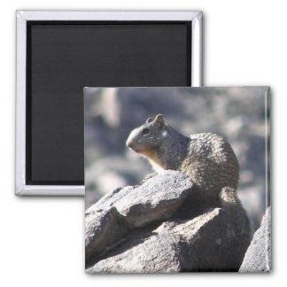 Rock Squirrel 2 Inch Square Magnet