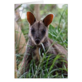 Rock Wallaby Card