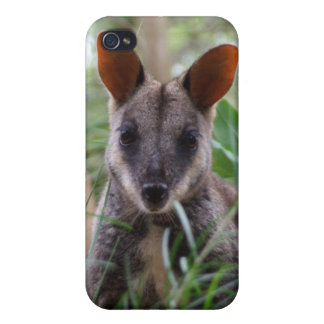 Rock Wallaby iPhone Case iPhone 4 Cover