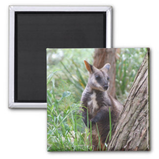 Rock Wallaby Magnet
