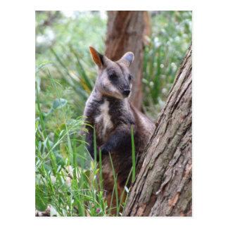 Rock Wallaby Postcard