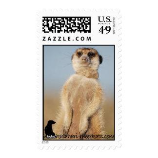 Rocket Dog Postage