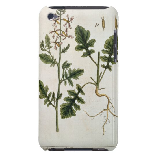 Rocket, plate 242 from 'A Curious Herbal', publish Barely There iPod Cover
