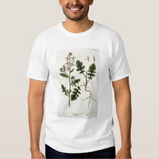 Rocket, plate 242 from 'A Curious Herbal', publish Tee Shirt