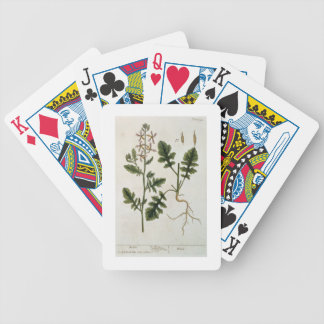 """Rocket, platea 242 """"de un herbario curioso"""", publi cartas de juego"""