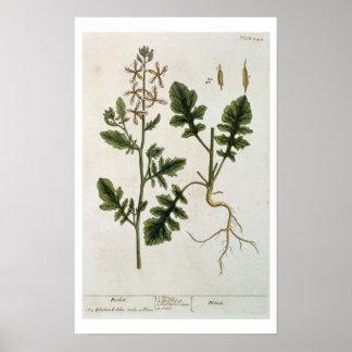 """Rocket, platea 242 """"de un herbario curioso"""", publi póster"""