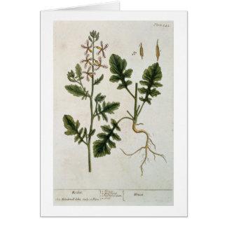 """Rocket, platea 242 """"de un herbario curioso"""", publi tarjeta de felicitación"""