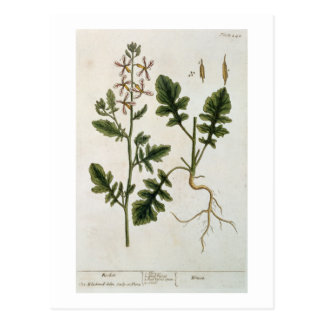 """Rocket, platea 242 """"de un herbario curioso"""", tarjeta postal"""