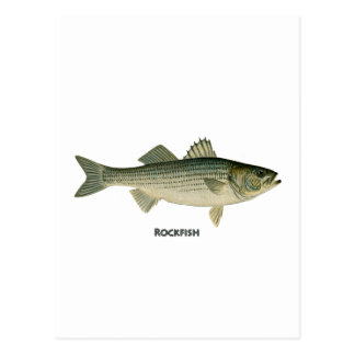 Rockfish Logo Postcard