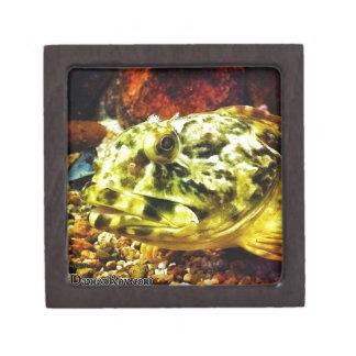 Rockfish Premium Trinket Boxes