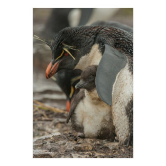 Rockhopper penguin and chick poster