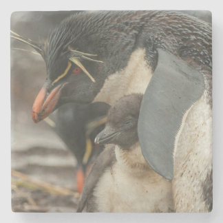 Rockhopper penguin and chick stone coaster