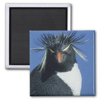 Rockhopper Penguin (Eudyptes chrysocome) 2 Inch Square Magnet