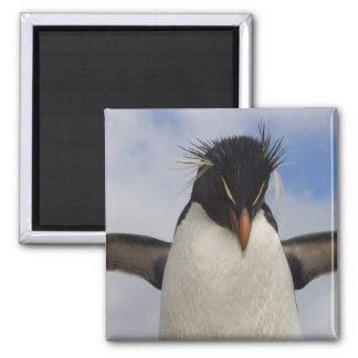 Rockhopper Penguin Eudyptes chrysocome 2 Inch Square Magnet