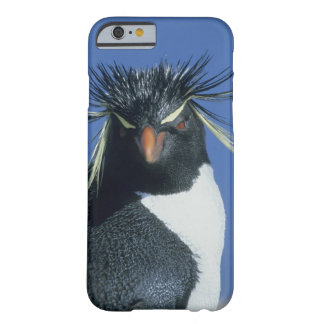 Rockhopper Penguin (Eudyptes chrysocome) Barely There iPhone 6 Case